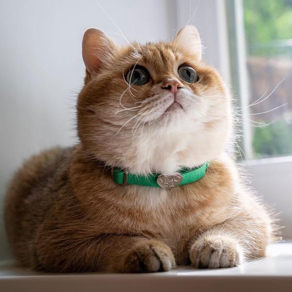อินสตาแกรมแมว