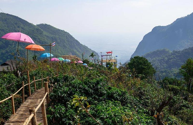 สะพานไม้ไผ่ไร่ผาฮี้ จังหวัดเชียงราย เดินทอดน่องชมวิวธรรมชาติสวย 360 องศา 1