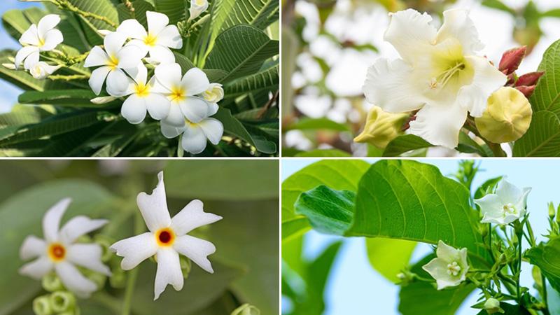 ต้นไม้จัดสวนดอกสีขาว