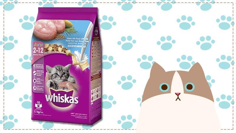อาหารลูกแมว ยี่ห้อไหนดี 2562